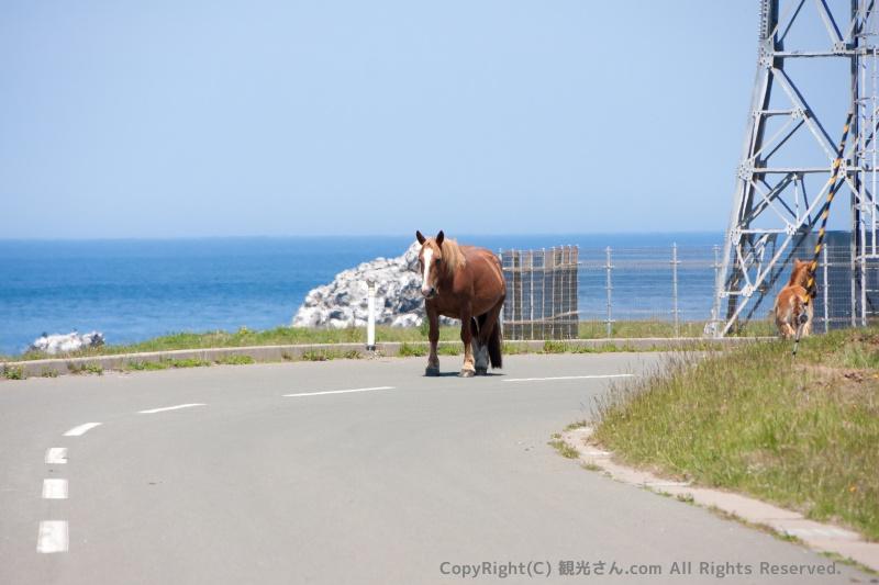道路上の寒立馬