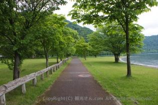 緑につつまれた道