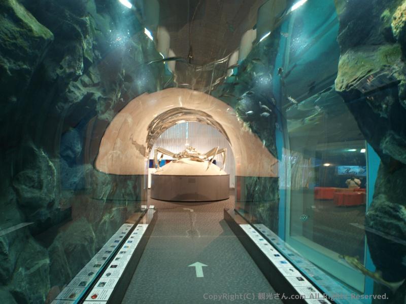 トンネル水槽