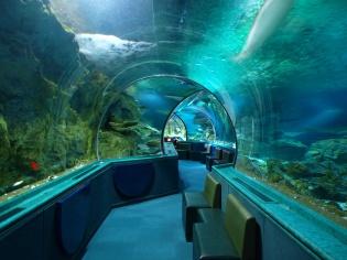 トンネル水槽内