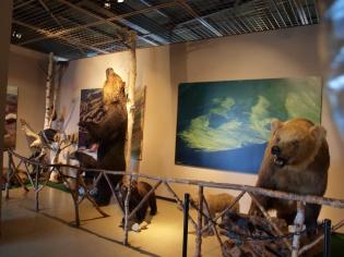 ヒグマ博物館1