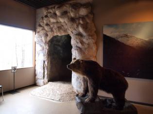 ヒグマ博物館2