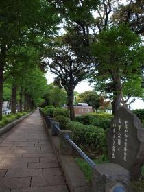 山下公園といちょう並木
