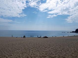 桂浜から見た海