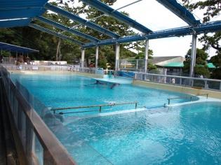イルカのプール