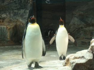 キングペンギン2
