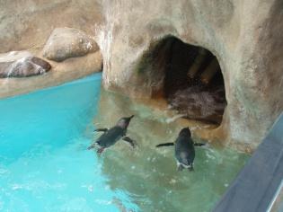 コガタペンギン2