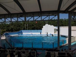 イルカのショープール