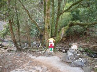 トトロの森4