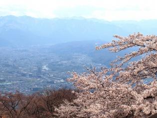 桜まつり3