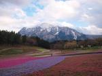 羊山公園 芝桜の丘