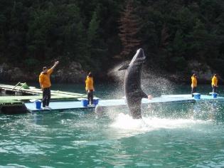 クジラのジャンプ